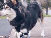 Cane disabile grado camminare grazie 3D-printig
