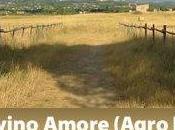 buona agricoltura nella campagna romana