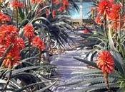 Aloe arborescens coltivazione