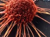 Australia: guerra cancro