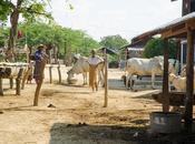 road Mandalay