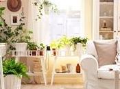 Piante appartamento fiori