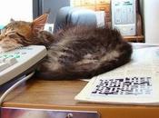 Stress ufficio: Giappone arrivano gatti aumenta produttività