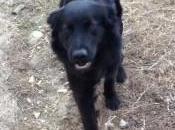 Siracusa: strage cani contrada Serramendola, sindaco sporge denuncia