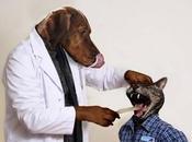 Marzo: visite veterinarie gratis