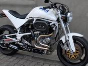 Buell White Lightning Tramp