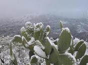 Siracusa: neve Ferla, Buscemi, Cassaro Buccheri, fiocchi anche città