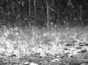 Pioggia...
