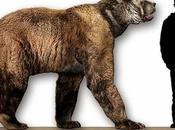 specie animali pericolo d'estinzione.