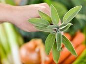 zuppa frantoiana secondo l'antica tradizione lucchese….