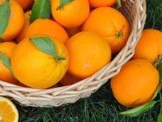 miglior difesa l'alimentazione. Micronutrienti fitonutrienti alleati della prevenzione