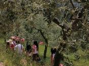 """aprile Trevi, Umbria, festeggia """"Pic Nic, arte, musica merende olivi"""""""