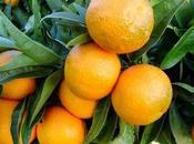 ultime clementine della stagione