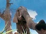 26/03/2015 WWF: Hidden Kingdoms, documentario sulla biodiversità