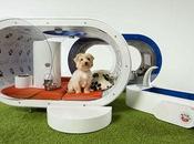 """""""vita cani"""" secondo Samsung."""