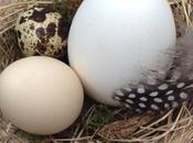 DIY: come creare nido naturale