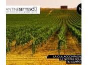 nuova medaglia Cantine Settesoli: Argento Chardonnay Settesoli Sicilia 2014