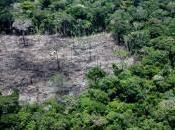 L'appello Verdi salvare l'Amazzonia. sette mesi distruzione degli alberi aumentata 215%