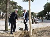 primo albero dopo l'uragano Versilia Capannina
