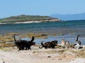 Vero Milis: Vincono gatti gattari Pallosu: felini marini restano dove sono.