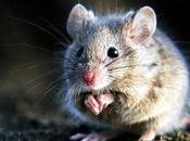 Uffici comunali invasi topi: succede napoletano