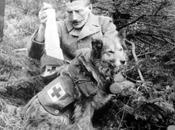 Mestre(VE): mostra dedicata agli animali nella Grande Guerra