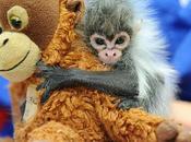 Estrela, scimmietta mamma peluches