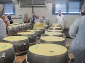 Consorzio Parmigiano Reggiano ripropone l'iniziativa Caseifici Aperti