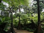 Evolution Garden siete pronti viaggio tempo?