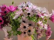 bouquet margherite africane