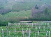 Conegliano Veneto: colline vigneti prosecco