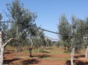 filosofie olistiche turismo consapevole benessere Puglia