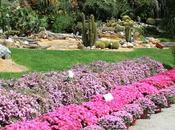 Mercato, mostre musica classica all'Orto Botanico