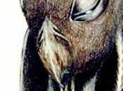 Alienologia: Horus (Falconiani)