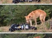 freddo terra salvare cane