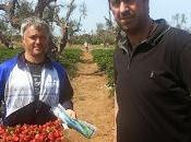 Nella zona ROSSA Gallipoli: Qualcuno avuto nello stesso campo fragole vegetano stentano crescere magari confinanti statale?