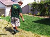 L'erba vicino dipinta verde
