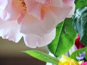 singola rosa