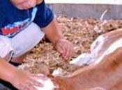 Continuiamo farli giocare animali della fattoria