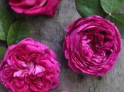 Rose sciroppo