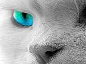 Sapevi Gatti guariscono proteggono nostro Spirito?