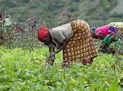 Donne Africa colonne portanti della crescita/Un rapporto sulle disuguaglianze genere Banca africana sviluppo