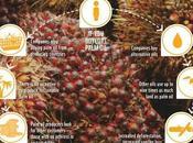 Salute: Alcune Importanti Cose Sapere Sull'Olio Palma
