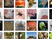 Riconosci esseri viventi della Natura