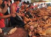 Yulin, Cina: strage cani solstizio d'estate