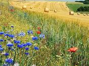 poesia Bertolucci, dedicata all'estate arrivare