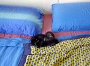 Traslochi cucciolo-gattosi