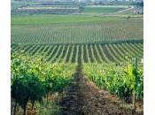 L'acqua l'irrigazione subirà aumenti