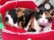 funerali Tama gatto capostazione