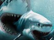 come ogni estate squali della finanza devono pagare resort